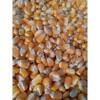 玉米收购价格 大量求购玉米 高粱 棉粕 淀粉等原料