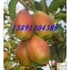 陕西冷库框子红香酥梨产地批发最新价格,红香酥梨出库了
