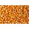 谁知道哪里大量收购玉米 傲农饲料厂 常年收购玉米