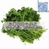 豆瓣菜种子 西洋菜种子豆瓣菜栽培 豆瓣菜价格 豆瓣菜种植