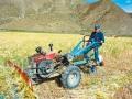 西藏日喀则市科技兴农创丰收 (2)