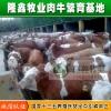 供应农业养殖 牛 各种牛品种 养殖 牛犊 西门塔尔