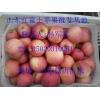 红富士苹果产地今日批发0.50元一斤