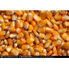 枣阳汉光长年采购高粱、玉米、小麦、大米、糯米、碎米、淀粉