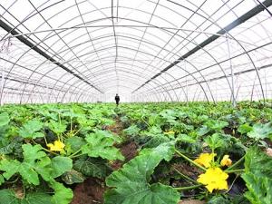 江苏海安县:现代农业助民增收
