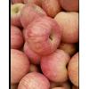 山东红富士苹果大量供应