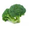 绿冠青花菜种子 批发