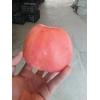 陕西渭北膜袋红富士苹果行情膜袋冰糖心苹果价格