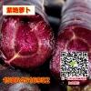 紫萝卜 紫艳萝卜新品 特种蔬菜 保健特菜 种子特价销售
