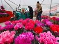 山东青州:鲜花展销迎新年 (4)