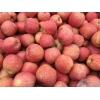 冷库红富士苹果年前大促销 红富士苹果产区批发价格