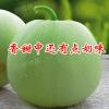 薄皮甜瓜种子批发-玉奶香1#