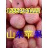 15554941222山东冷库纸袋红富士苹果批发价格