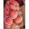 山东冷库红富士苹果年前便宜了 今日红富士苹果批发价格多少
