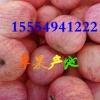 15554941222山东红富士苹果产地直销批发价格