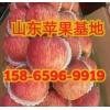 山东红富士苹果市场价格多少 现在冷库苹果什么价格