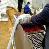 泡沫盘育苗播种机 漂盘播种机 风雷精机