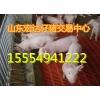15554941222山东仔猪批发价格