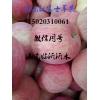 15020310061山东红富士苹果供应批发价格