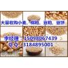 辽宁收购玉米 垄上收购玉米 实力厂家