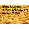 玉米最新价格预测,未来玉米价格还会涨吗