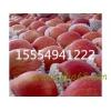 15554941222冷库红富士苹果直销批发价格