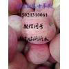 15020310061山东冷库优质红富士苹果批发供应