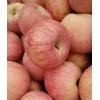 山东冷库红富士苹果大量供应