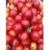 哪里油桃便宜质量好 油桃产区批发 油桃信息批发