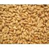 饲料厂现款求购玉米小麦高粱饲木薯淀粉等原料