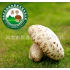 昌盛宝菇精品天白大花菇宝菇一号送礼中高端礼品厂家直销