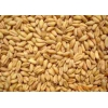 求购糯米淀粉碎米小麦高粱玉米大米豆类等原料