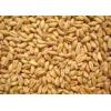 华粮求购糯米大米碎米大米淀粉小麦豆类玉米等原料