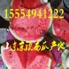 山东京欣西瓜批发价格大棚西瓜多少钱一斤15554941222