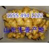 山东大黄姜产地价格15554941222小黄姜批发多少钱一斤
