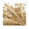 崇州市声誉酿酒公司求购大量小麦