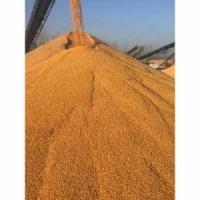 成都蜀窖声誉酿酒公司诚意求购小麦碎米糯米木薯淀粉