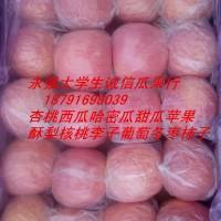 陕西红富士苹果批发红富士苹果基地价格