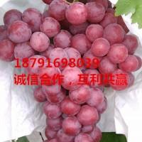 陕西红提葡萄批发纸袋红提葡萄基地价格
