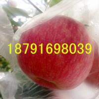 陕西纸夹膜红富士苹果批发 纸夹膜红富士苹果产地价格