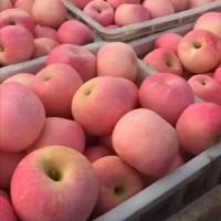 山东水晶红富士苹果供应