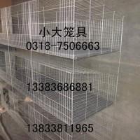 供应鸽子笼 兔子笼 小鸡笼 运输笼 鹌鹑笼 鹧鸪笼 仔母兔笼
