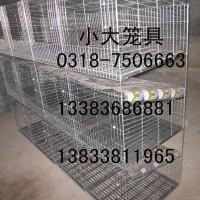 供十二位鸽笼 十二位兔笼 九位兔子笼 鹌鹑笼 运输笼 蛋鸡笼