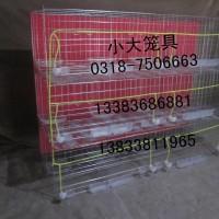 生产鹌鹑笼鹧鸪笼宠物笼运输笼鸡笼鸽笼兔笼鸟笼狗笼八哥笼