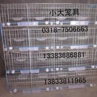 十二位鸽笼 十六位鸽笼 上料机用鸽笼 兔子笼 鹌鹑笼 蛋鸡笼