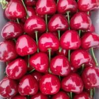 哪里有大樱桃批发 哪里有大樱桃代办 大樱桃代办怎么收费