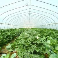 大棚蔬菜种植定做蔬菜大棚